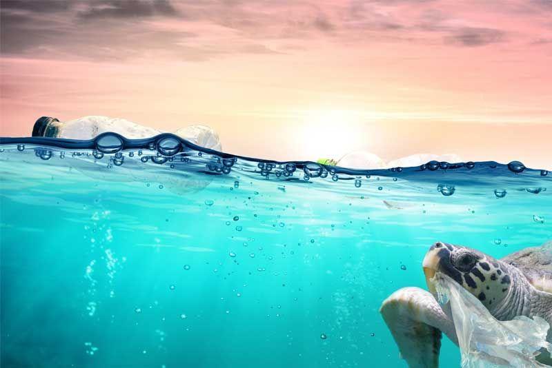 Los peligros de recolectar tu propia agua de mar